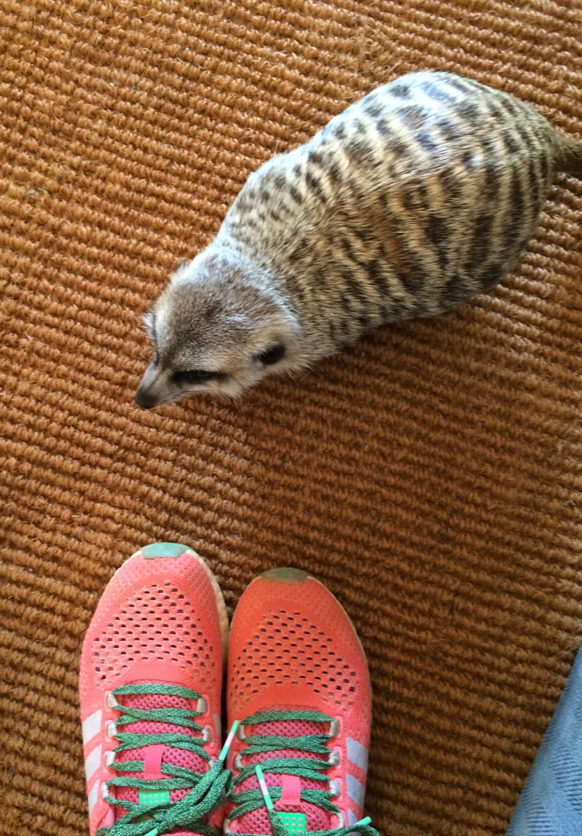 Taking my Adidas Climachill Cosmic Boost shoes on safari in Africa