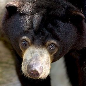 Is the Bornean Sun Bear Conservation Centre worth visiting?