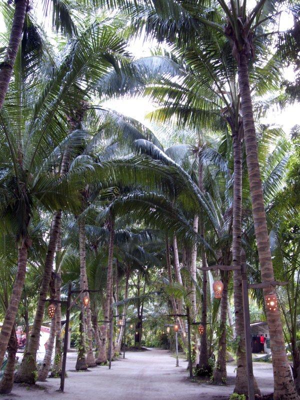 Malaysia_Mabul Island_P1070989